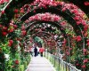 Bulgaria Rose Festival to take place in Hanoi next month