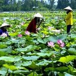 Promote tourism to the province of Ninh Binh